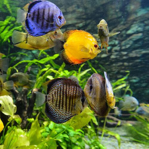 Akváriumi haleledelek